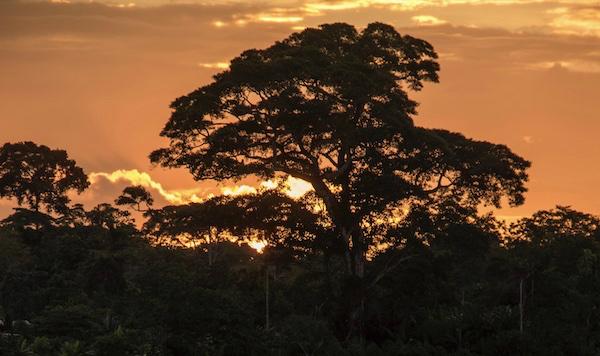 Sunset on Ecuadorian Amazonian rainforest on board the luxury cruise ship Anakonda