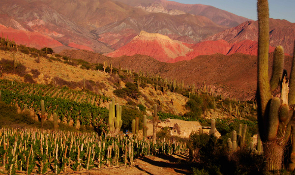 Argentina Tourism The world's highest vineyard at 3'349 meters above mean sea level wine tours Argentina pie experiences