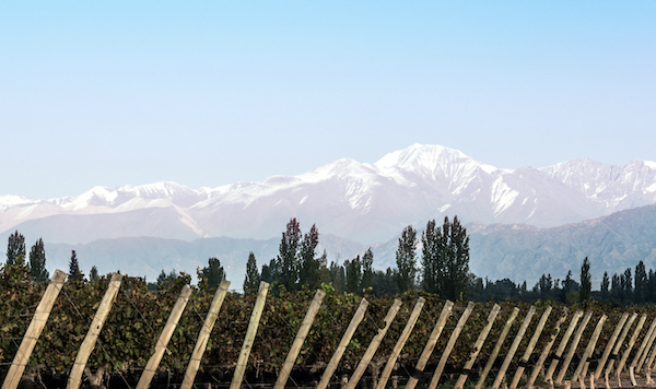 Argentina Tourism Vineyards and the Andes Cordillera in Mendoza